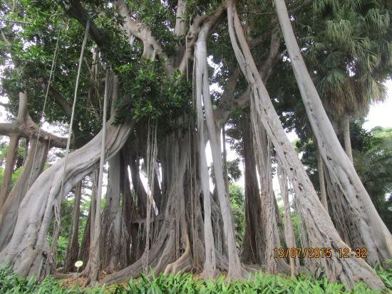 Kwitnące palmy - Picture of Botanical Gardens (Jardin Botanico), Puerto de la...
