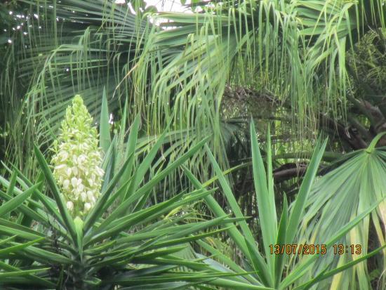 Kwitn ce palmy picture of botanical gardens jardin - Botanic meubles de jardin ...