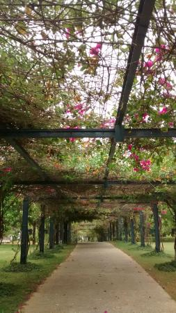 Vivanta by Taj - Fisherman's Cove: Garden path