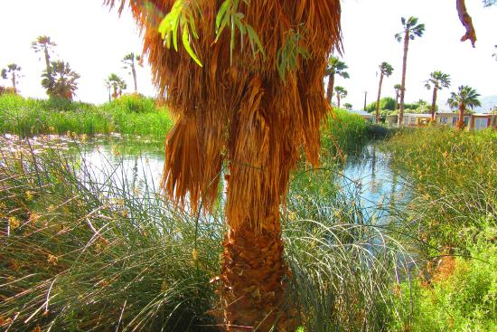 Sands Rv & Golf Resort: The little lake