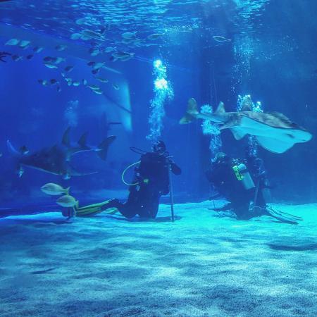 Newport Aquarium Hotels Deals