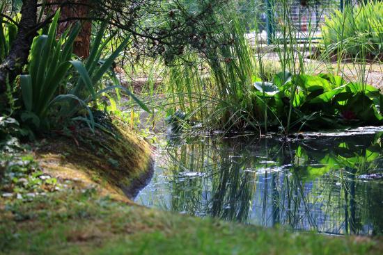 Parc Hotel Wangenbourg : Petite mare dans le parc