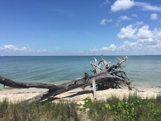 Boca Grande, FL: Watched the manatee and an alligator in the bay. Beautiful beach and pathways with unique vegeta