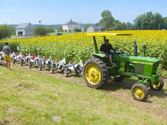 Tractor Train Rides : The children s train being pulled by a farm tractor