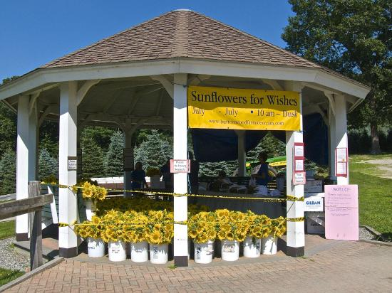 Griswold, Κονέκτικατ: The gazebo where sunflower gifts are sold for charity.