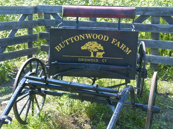 Griswold, CT: A special horse and buggy rig advertises the farm near a field of sunflowers.