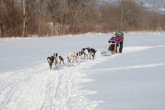 Mushing Works Dog Sledding Tours