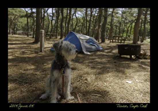 Adventure Bound Camping Resort - Cape Cod: My dog at Adventure Bound