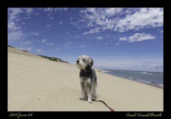 Adventure Bound Camping Resort - Cape Cod: Coast Guard Beach