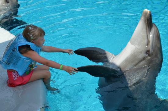 здороваются с дельфином - Bild von Dolphinarium Kemer ...