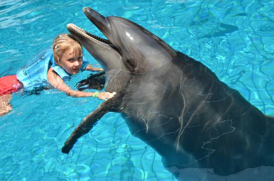 Дельфинарий Кемер - Billede af Dolphinarium Kemer, Kemer ...