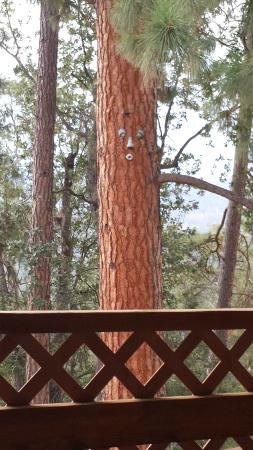 Evergreen Haus: Whistling Tree