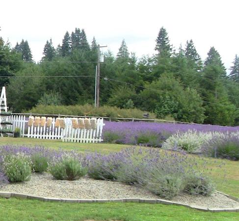 Castle Rock Lavender