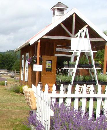 Castle Rock, WA: Little lavender store where you can buy honey, lavender sugar, lavender plants, & lavender produ