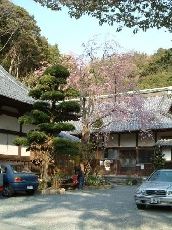 Rinso-In Temple