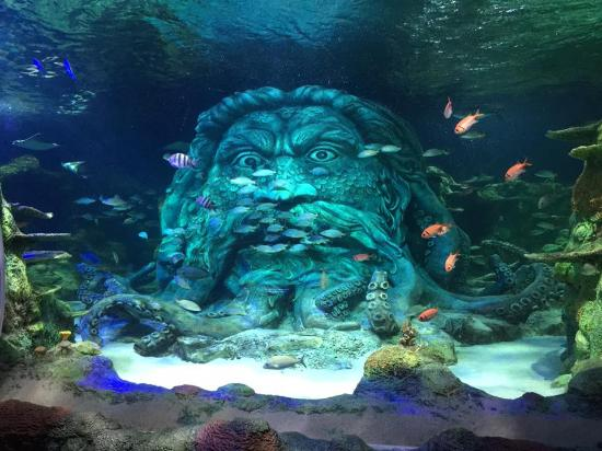The Under Sea Exhibit Center Piece Picture Of Sea Life