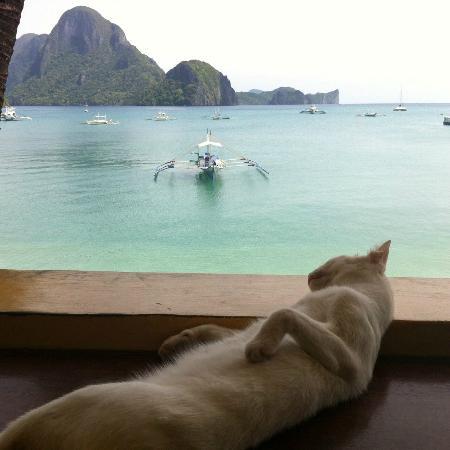Ogie Beach Pension & Resto Bar : I named this cat Pompom. Resident Cat at Og's