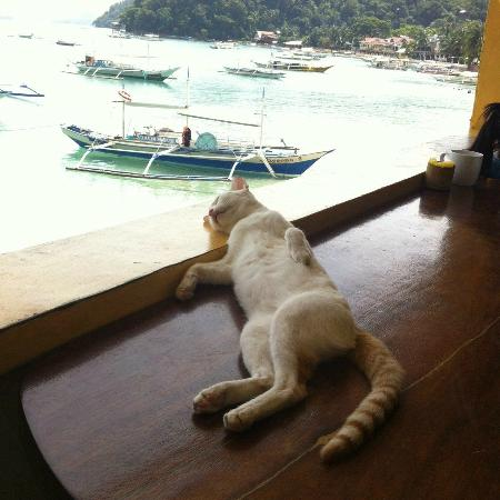 Ogie Beach Pension & Resto Bar: Boats for island hopping and Pompom the Cat