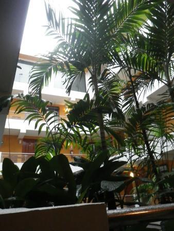 Victoria Regia Hotel & Suites: Poolside