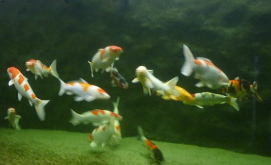 The Danube Delta Museum : Aquarium,1