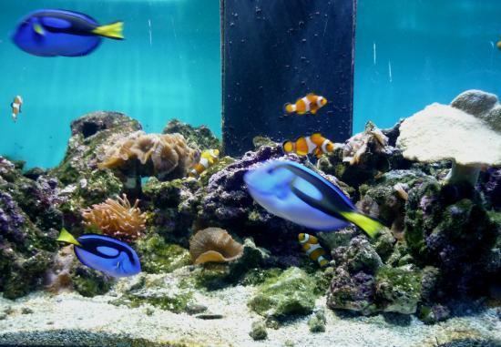 The Danube Delta Museum : Aquarium,2