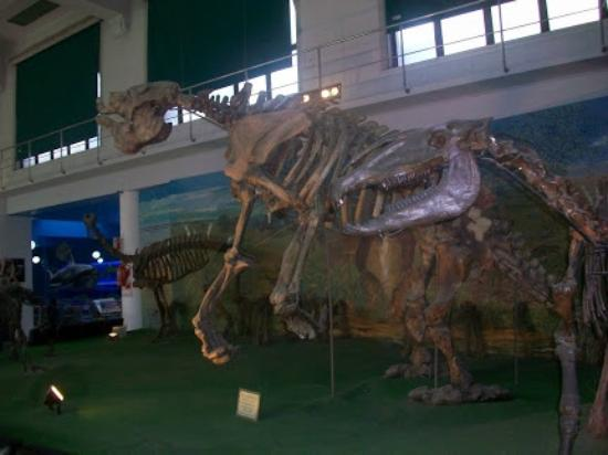 Museo de Ciencias Naturales de La Plata: Esqueleto de dinosaurio