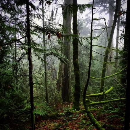 North Saanich, Καναδάς: Easy part of the trail