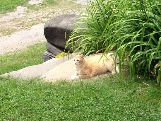 Washington, VT: Outdoor Cat