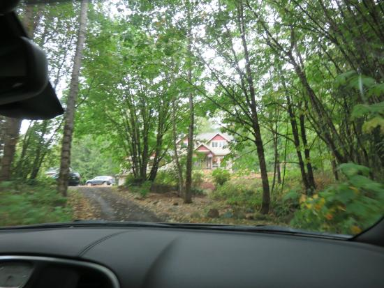 Mt. Woodside Bed & Breakfast: The road up to the house, surrounded by beautiful woodland