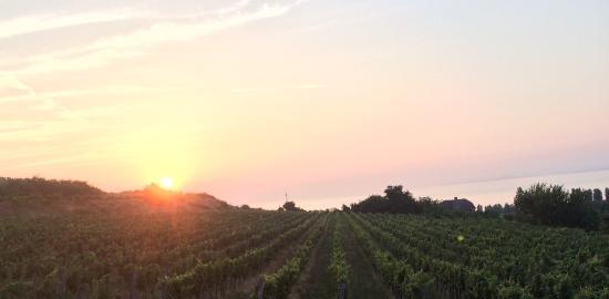 Landscape - Szeremley Wine House Photo