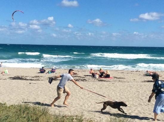 Jupiter, FL: Все счастливы: и собаки, и их хозяева!