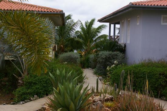 Carribean Club Bar and Restaurant: De tuin