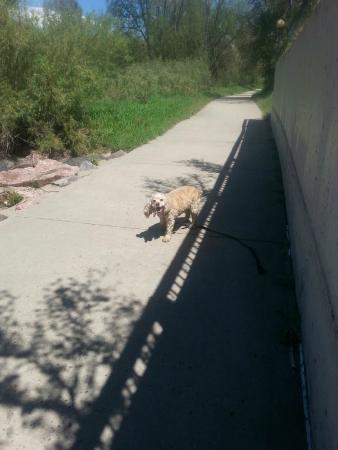 Cherry Creek Trail: The four legged friend on the Bike Path