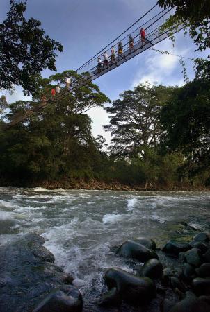 Tirimbina Lodge: El puente