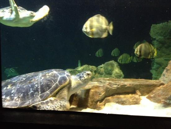 Tartaruga picture of acquario di livorno livorno for Tartaruga da acquario