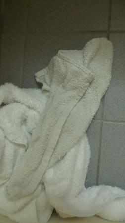 Lazy Bear Inn: dingy towels