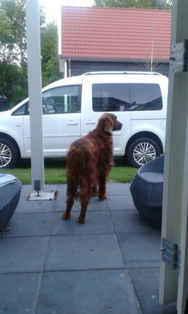 Hotel De Zeeuwse Stromen: Onze rode ier een kijkje aan het nemen op het terras