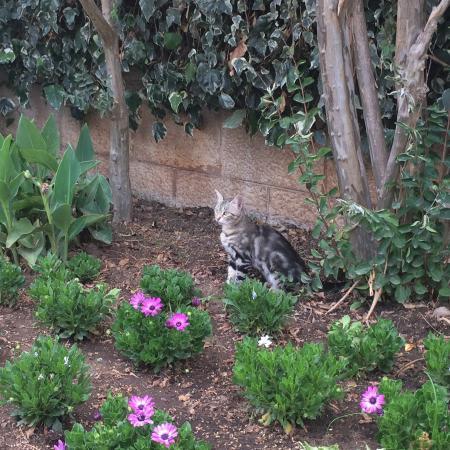 Aleksandar : Там живет очень красивый кот)