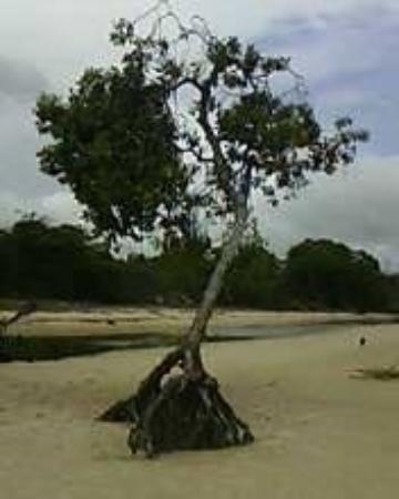 Caju-Una Beach