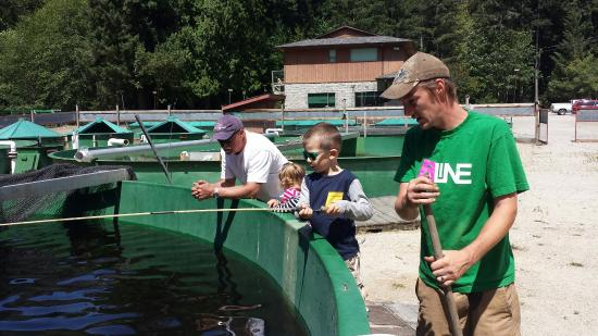 Chapman Creek Hatchery and Nature Destination: Fishing for Rainbow Trout