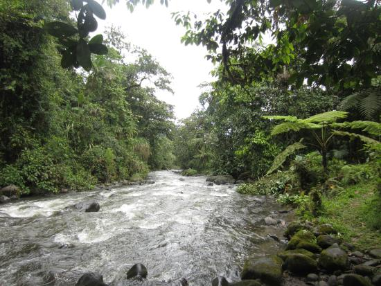 Mindo Garden: MIndo River from directly below Aves chalet