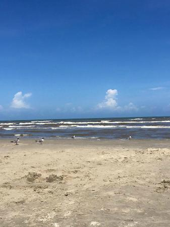 Gulf Shores Condominiums: beach behind condo