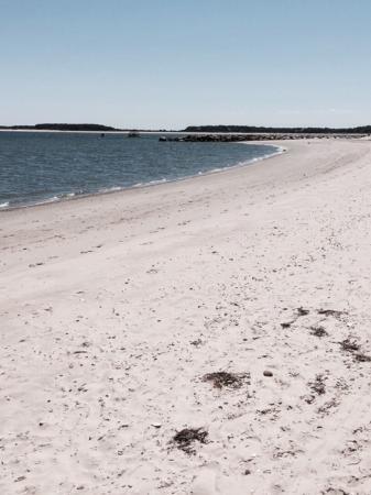 Kalmus Beach: Lots of seashells!
