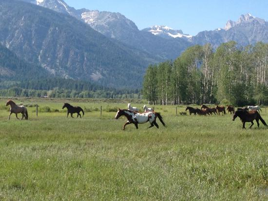 R Lazy S Ranch: The ranch horses return to pasture with the Tetons as a backdrop.
