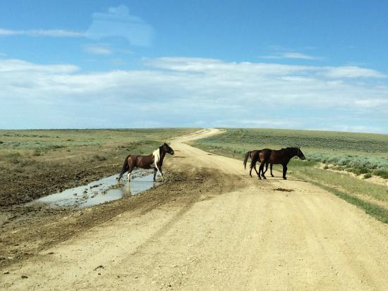 Rock Springs, WY: Beautiful Wild Horses