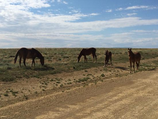 Rock Springs, WY: Beautiful Wild Horses