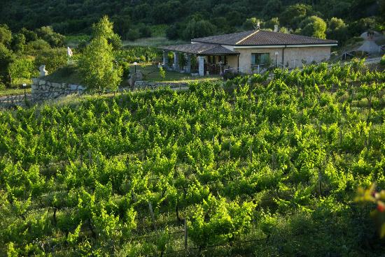 Agriturismo Su Solianu: Agriturismo