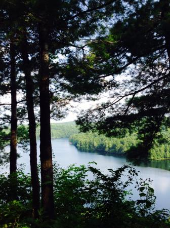 Limberlost Forest and Wildlife Reserve: photo1.jpg