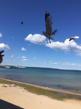 Mackinaw Beach and Bay - Inn & Suites: photo2.jpg