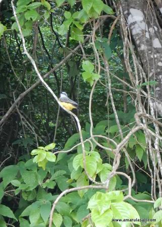 Costa Noreste, Tobago: Pirate's Bay, Tobago